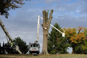 tree removal in louisville field