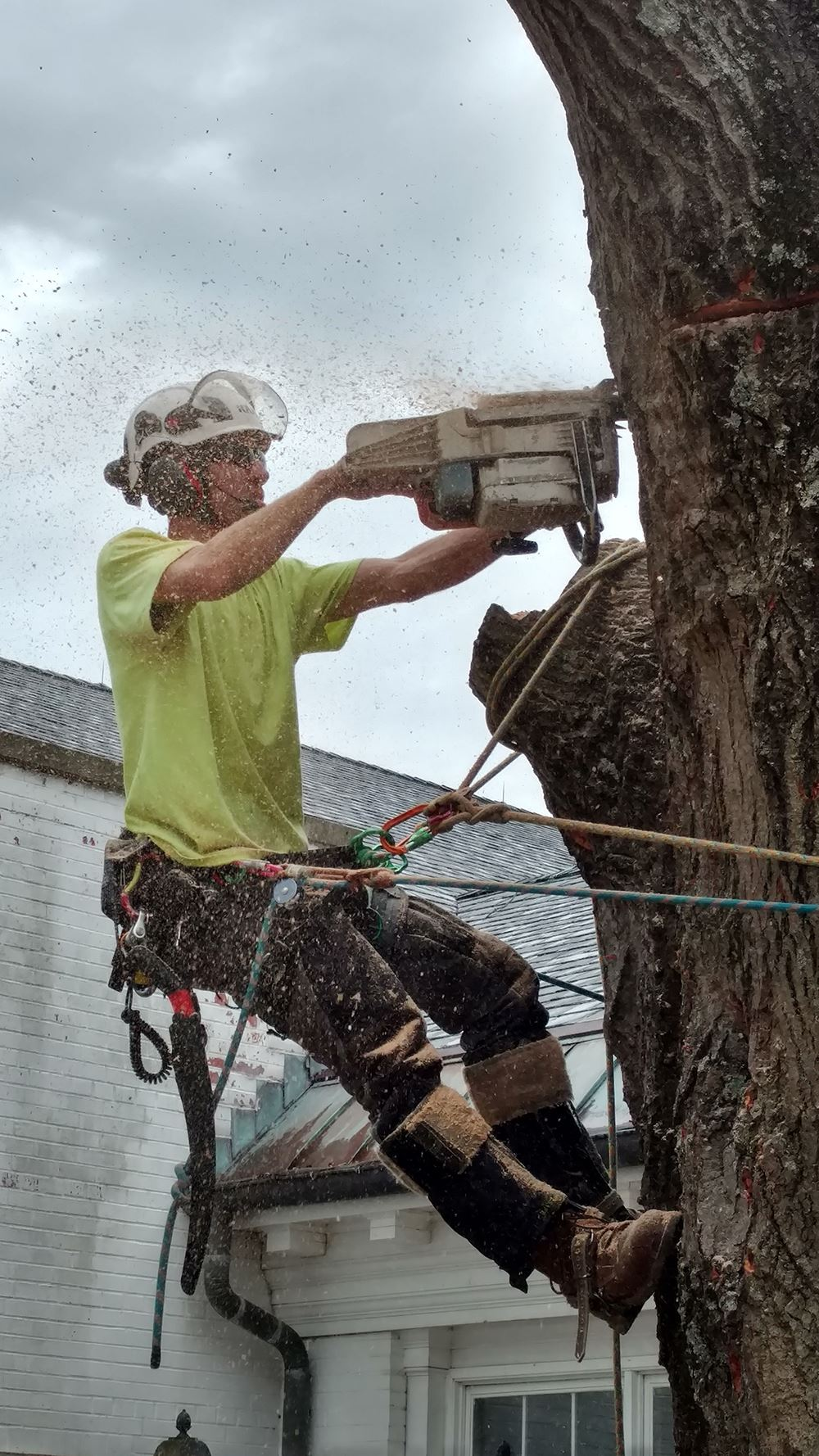 tree removal in louisville