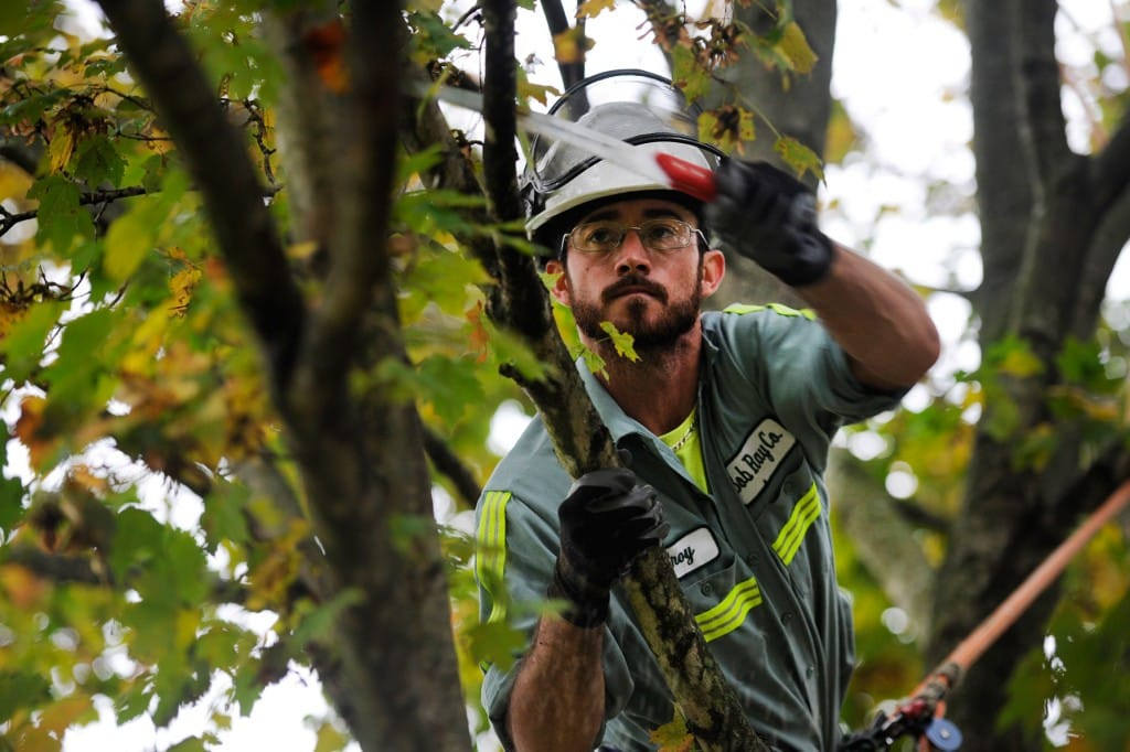 tree trimming louisville