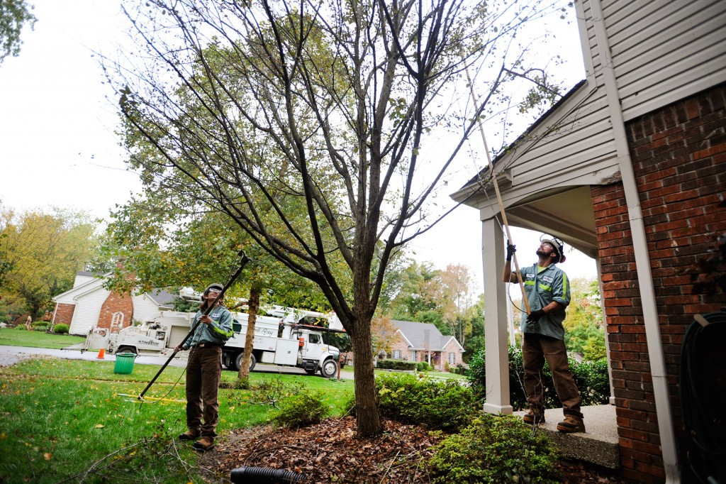 tree health louisville