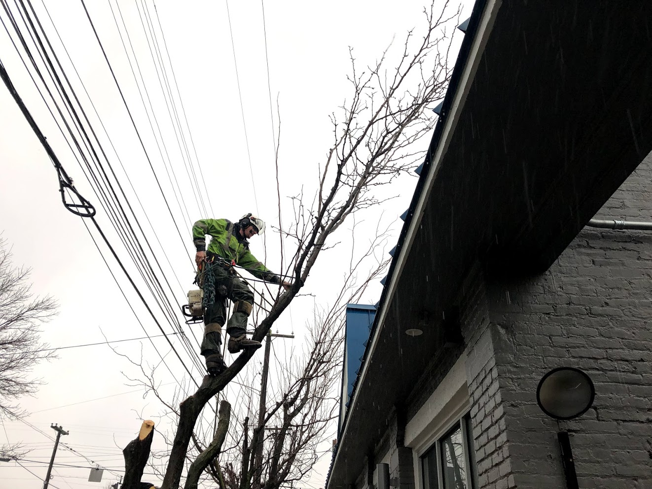 highland tree removal louisville
