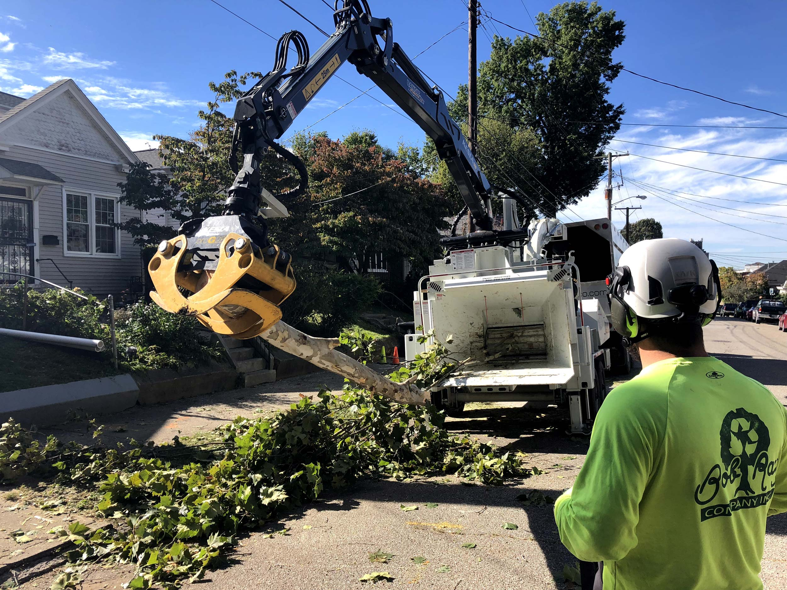 tree removal highlands
