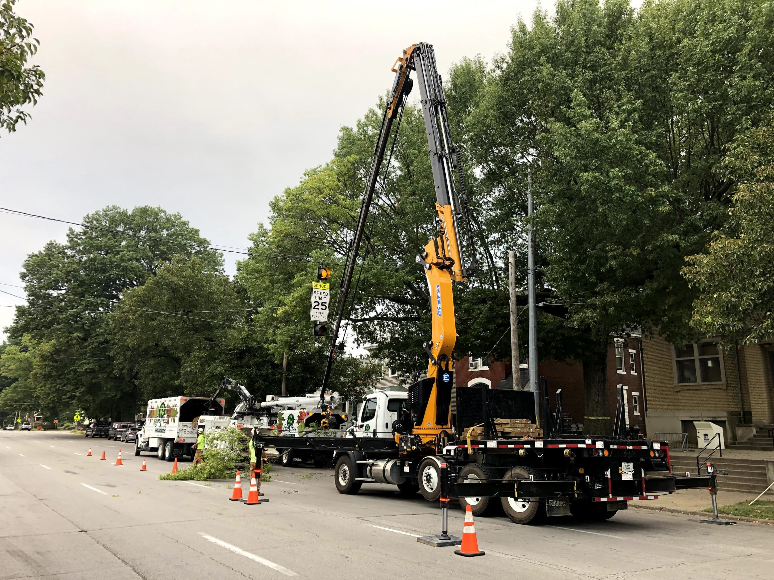 removing tree above powerlines downtown louisville