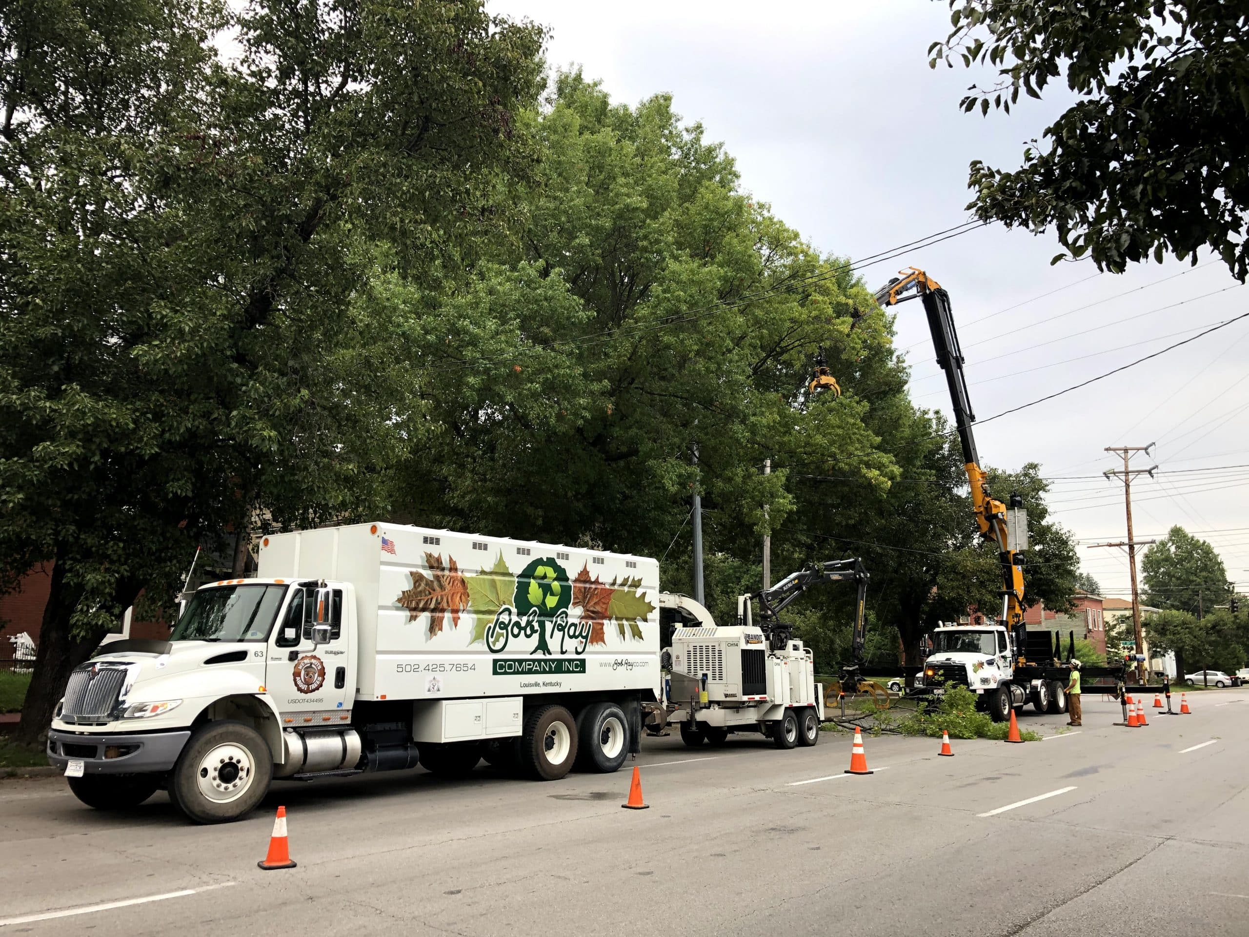 removing a tree in louisville