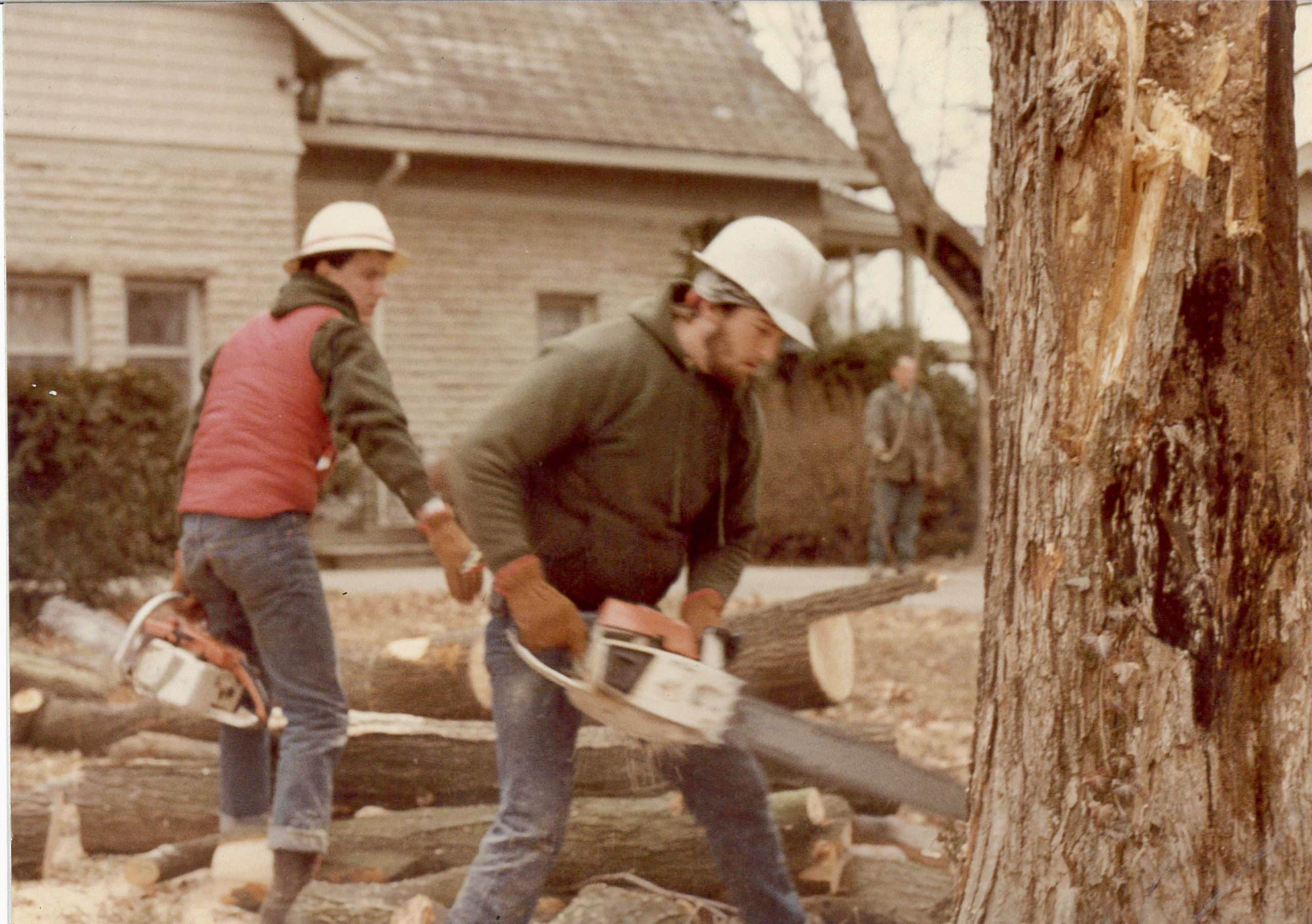 tee ray cutting tree with chainsaw